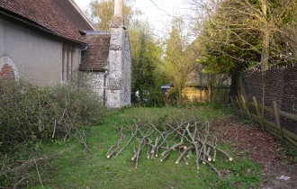 Coppicing at All Saints Church